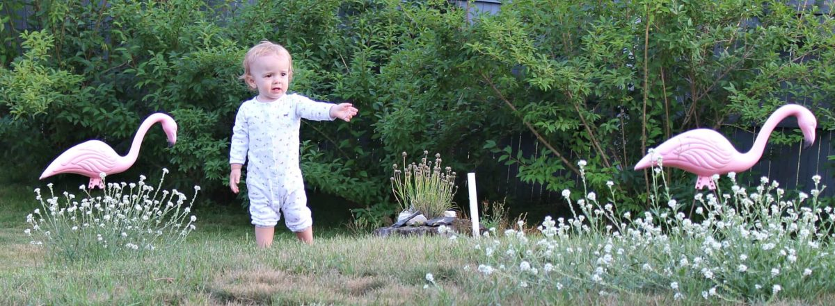 Toddler standing on grass pointing to pink plastic flamingos