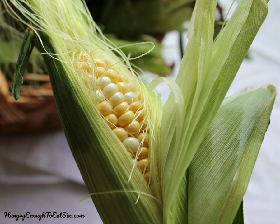 Image of an ear of corn with husks opened to show corn kernels inside.