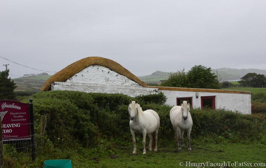 Image of two white horses next to a thatched cottage on St. John's Point, Ireland