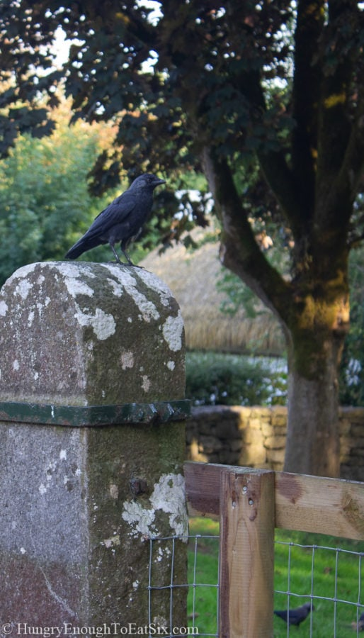 Image of bird on a post on the grounds of Bunratty Castle