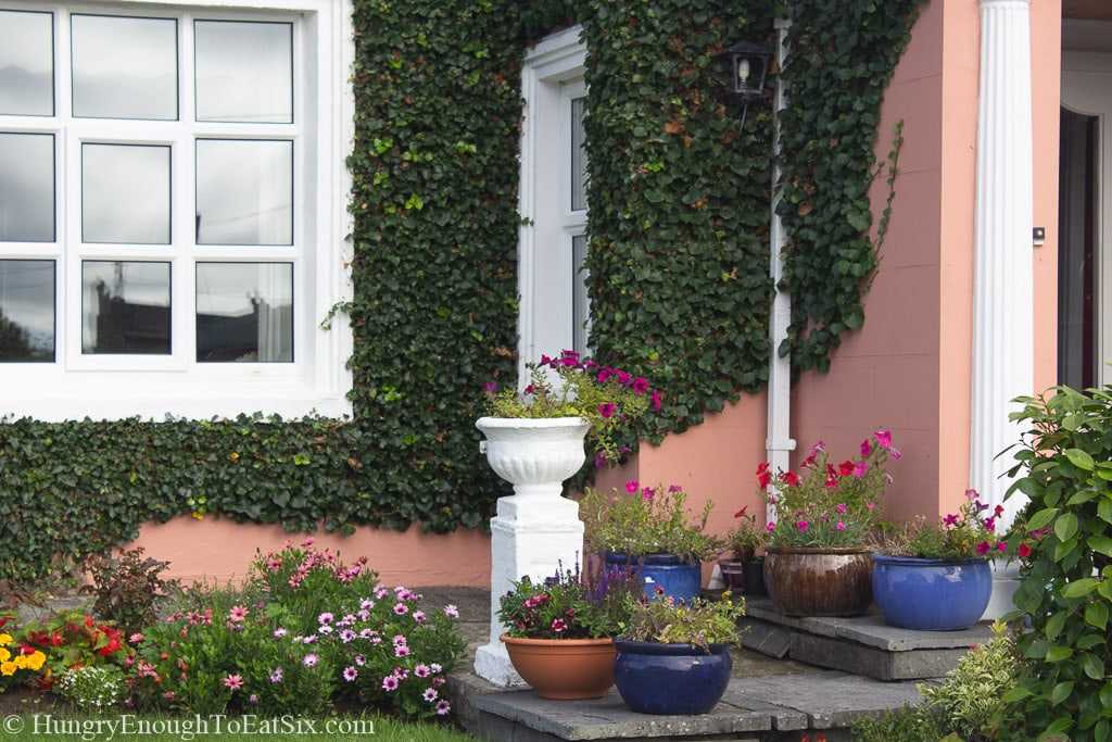 Planters by a salmon colored wall