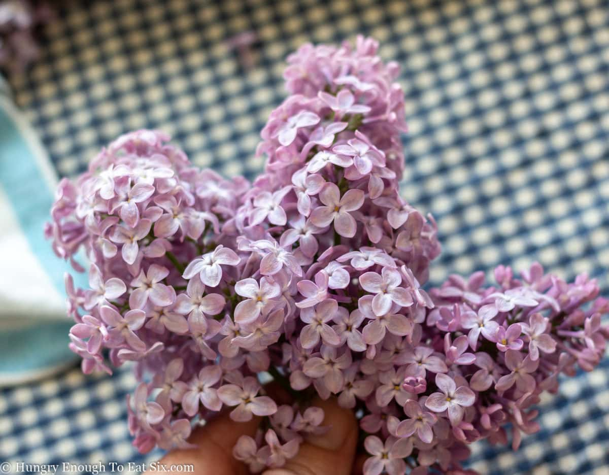 Three sprigs of purple lilacs held in a hand.